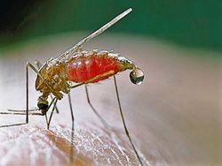 Какие меры по борьбе с малярией предпринимаются в Кыргызстане?