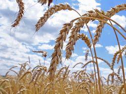 Армянская оппозиция предлагает увеличить субсидирование аграриев