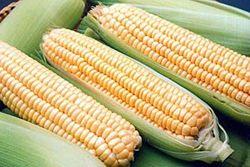 Кукуруза из Украины дебютировала на китайском рынке