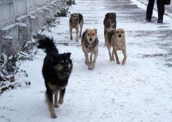 Стая бродячих собак до смерти искусала мальчика в Ростовской области