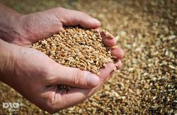 В Одесском порту будет новый зерновой терминал