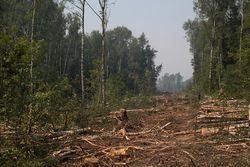 Останкинский суд признал, что вырубка Химкинского леса обоснована и легальна