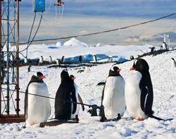 Вторжение в Антарктиду чуждых видов флоры и фауны