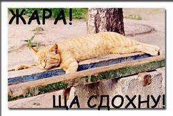 В Украину придет сумасшедшая жара