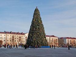 Зачем преступники спилили главную елку города?