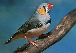 Ученые узнали, как определить продолжительность жизни у птиц