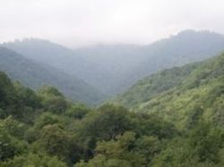 Техутский лес