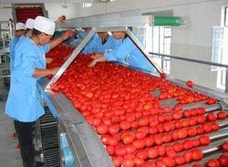 завод по переработке томатов
