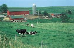 Почему в Латвии так плохо с сельским хозяйством?
