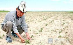 Сколько средств выделят на развитие агросектора в Кыргызстане?