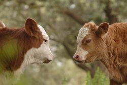 Рынок мяса: чем вызван спрос и сокращение предложения?