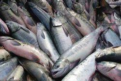Армения намерена нарастить экспорт рыбы