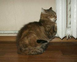 Когда станет тепло в киевских квартирах?