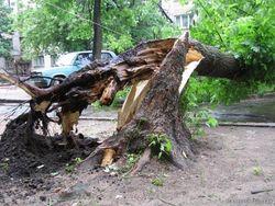 В Казахстане продают деревья, пострадавшие от стихии