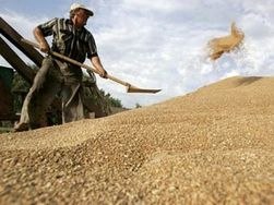 В Казахстане не знают, что делать с рекордным количеством урожая зерна