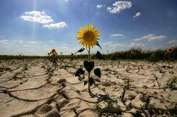 Глобальное потепление снижает урожаи зерновых?