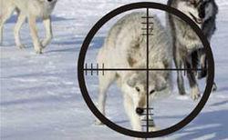В Кыргызстане увеличены премии за отстрел хищников