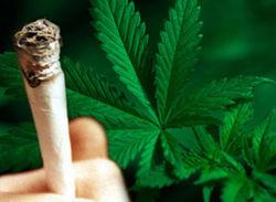 В Беларуси попался россиянин с... тремя ящиками марихуаны