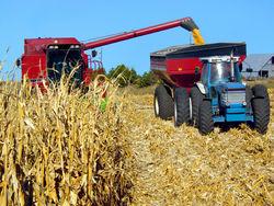 Рынок кукурузы: какая цена наиболее привлекательна для инвесторов?