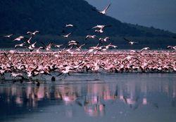 Учеными установлена причина миграции птиц