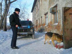 В Крыму, грабителей помогла задержать служебная собака