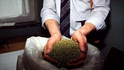 В Москве пойманы сотрудники ГАИ, торговавшие наркотиками