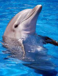 Дельфины - самые умные животные в мире?
