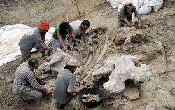 В Анголе впервые нашли останки... динозавра