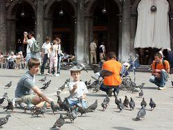 Почему в Испании кормление голубей оказалось под запретом?