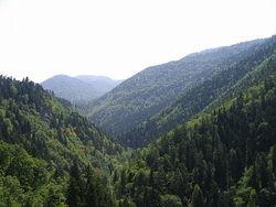Инвесторам: грузинские леса можно будет брать в аренду
