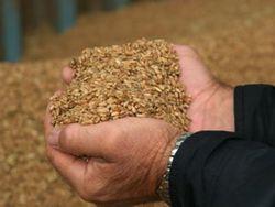 Сколько зерна намолочено в Казахстане?
