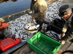 улов рыбы