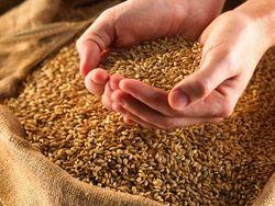 В Украине вводятся новые пошлины на экспорт зерна