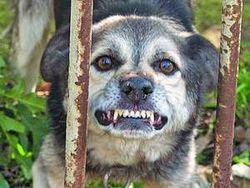 В Ровенской области детей покусала бешеная собака
