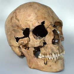 При благоустройстве газона в Отрадном обнаружили человеческий череп