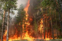 Российские власти дополнили перечень мер противопожарной безопасности лесов