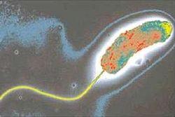 В Днестре обнаружен холерный вибрион