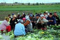 Эмигранты массово едут в Украину