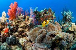 Как филиппинские экологи спасут кораллы от туристов?
