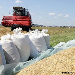 зерновые запасы