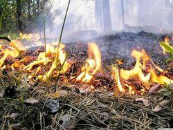 Площадь пожаров в РФ в 2011 году увеличилась втрое