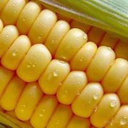 Обзор рынка кукурузы