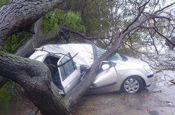 Упавшее на автомобиль дерево убило двоих человек в Закарпатье