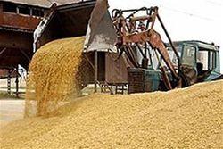 Сколько зерновых собрали аграрии Таджикистана?