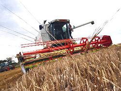 Сколько зерна собрано в Узбекистане?