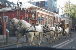 В Москве из-за нападения лошади госпитализированы три женщины