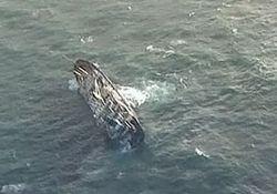 Теплоход «Челябинск» спас 13 российских моряков в Японском море
