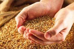 Когда РФ примет решение относительно отмены эмбарго на экспорт зерна?