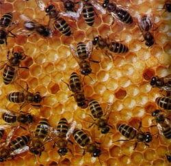 Чем озабочены армянские пчеловоды?