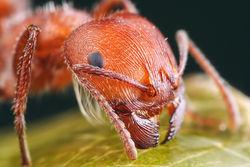 С помощью чего муравьи могут спастись от наводнения?